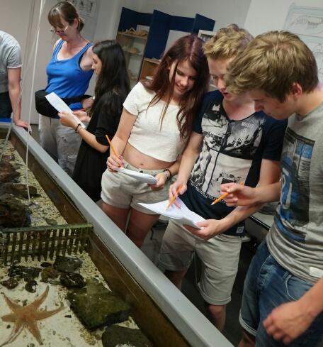Meeresbiologie in Cinqueterre